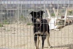 Sad abandoned dogs Royalty Free Stock Photography