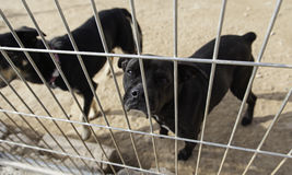 Sad abandoned dogs Stock Images