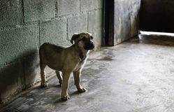 Sad abandoned dogs Stock Image