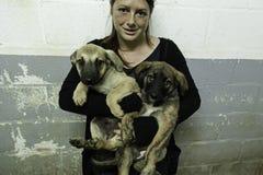 Sad abandoned dogs Royalty Free Stock Photos