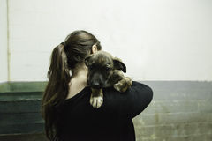 Sad abandoned dogs. Locked kennel dogs abandoned, sadness Stock Photos
