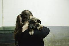 Sad abandoned dogs Stock Photos