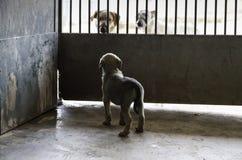 Sad abandoned dogs. Locked kennel dogs abandoned, sadness Royalty Free Stock Image