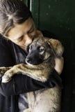 Sad abandoned dogs. Locked kennel dogs abandoned, sadness Stock Photo