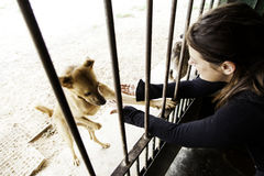 Sad abandoned dogs. Locked kennel dogs abandoned, sadness Royalty Free Stock Photos