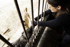 Sad abandoned dogs. Locked kennel dogs abandoned, sadness Royalty Free Stock Photography