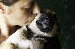 Sad abandoned dogs. Locked kennel dogs abandoned, sadness Stock Images