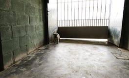 Sad abandoned dogs. Locked kennel dogs abandoned, sadness Stock Photography