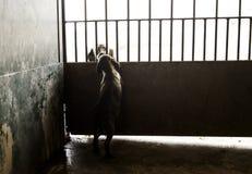 Sad abandoned dogs. Locked kennel dogs abandoned, sadness Stock Image