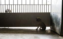 Sad abandoned dogs. Locked kennel dogs abandoned, sadness Royalty Free Stock Photo