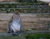 Sad abandoned monkey sitting on the side of the road thinking at the meaning of life stock photography