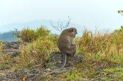 SAD apor i bergen Royaltyfria Foton