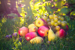 Sad autumn fruits grass sunshine Stock Image