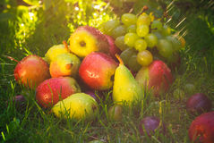 Sad autumn fruits grass sunshine Royalty Free Stock Photography
