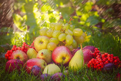 Sad autumn fruits grass sunshine Stock Photography
