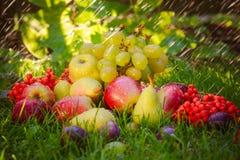 Sad autumn fruits grass sunshine Royalty Free Stock Images