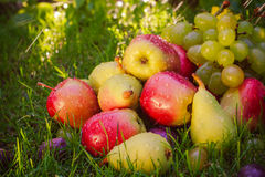 Sad autumn fruits grass sunshine Stock Image