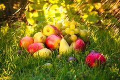 Sad autumn fruits grass sunshine Royalty Free Stock Image