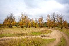 Sad autumn landscape and branching of roads. Near autumn lindens stock photos