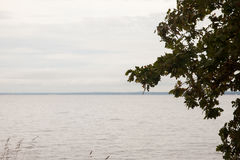 Sad autumn landscape, sea shore and alone tree Royalty Free Stock Images