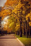 A sad autumn park in cloudy weather stock images