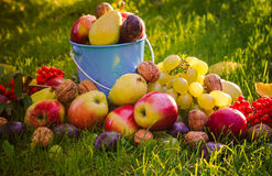 Sad autumn summer fruits grass sunshine Stock Images