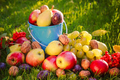 Sad autumn summer fruits grass sunshine Royalty Free Stock Photos