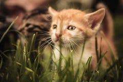 Sad baby cat looking away Royalty Free Stock Photos