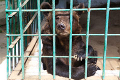 Sad bear in a cage Stock Photography