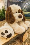 Sad big stuffed white dog doll on a wooden bench stock photography