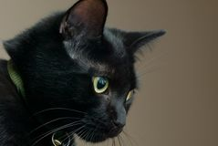 Sad black cat. A black cat looking sad stock photo
