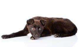 Sad black crossbreed dog lying. isolated on white background Royalty Free Stock Image