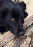Sad black dog is laying on outdoors Stock Photo