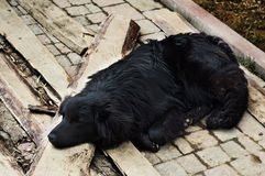 Sad black dog is laying on outdoors Royalty Free Stock Images
