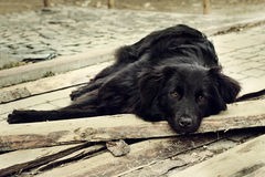 Sad black dog is laying on outdoors Royalty Free Stock Photos