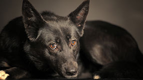Sad black dog Royalty Free Stock Images