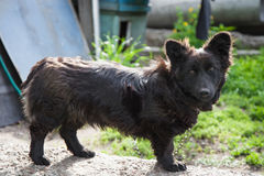 Sad black dog Stock Photography