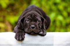 Sad black puppy Stock Photos