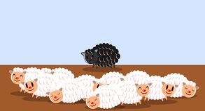 Sad Black Sheep Isolated In The Meadow Stock Photos