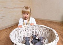 Sad Blond Girl Behind a Basket of Sphynx Kittens Royalty Free Stock Photo