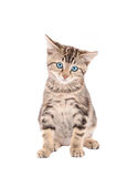 Sad blue-eyed tabby kitten Stock Image