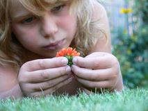 Sad boy with flower. The sad boy with the orange flower on the meadow Royalty Free Stock Photography
