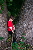Sad boy at the tree. Three or four years old boy. Summertime Stock Photos