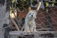 Caged dog sad. Sad caged dog looking at you Stock Image