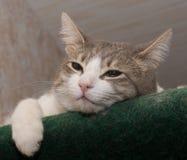 Sad cat. A sad cat lying on the green carpet stock photography
