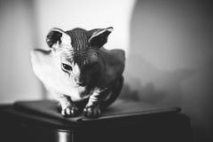 Sad cat alone Stock Photos