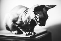 Sad cat alone Royalty Free Stock Photos