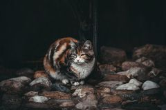 Sad cat on a black background. Waiting for the owner. Beautiful colorful cat on colorful stones. Street cats royalty free stock photography