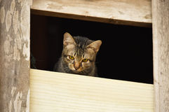 Sad cat. Brown in the window stock photo