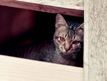 Sad cat. Brown in the window royalty free stock photo